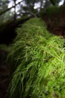 mossy log by 4estfire