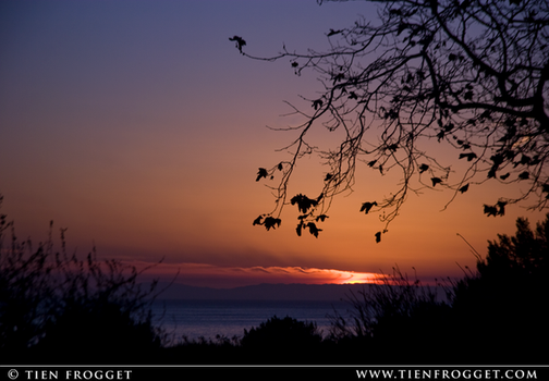 Silhouetted Trees Over Sea by tienlove