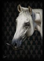 Equine Portrait by a-Astree
