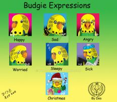 Budgie Expressions by Thagirion
