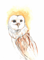 Barn Owl by AAOlsonDesign