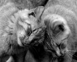 Togetherness. by Ashleys-Creations