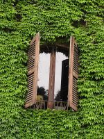 window 01 by Caltha-stock