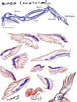 Wings Study - Skeleton by Eclipseowl