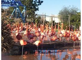 FLAMINGOS!!!! by Awesomesaucical