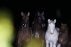 Entry for Schleich Horse Haven contest by Flyingfetlocks