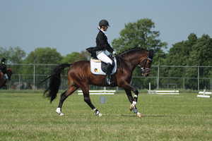 Dressage stock 49 by Bundy-Stock