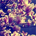 magnolie by Tattoomaus78
