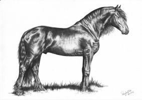 Friesian Stallion by AnnaP-Artwork