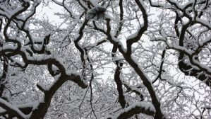 trees dipped in snow by vSphera