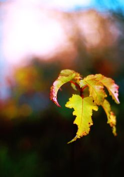 Yellow leaves by anastasiy-r