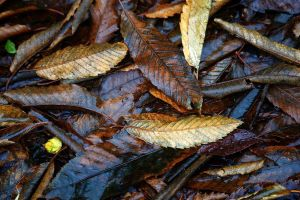 wet leaves by awjay