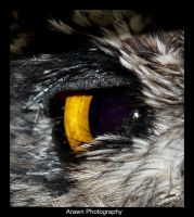 Owl's Eye by Arawn-Photography