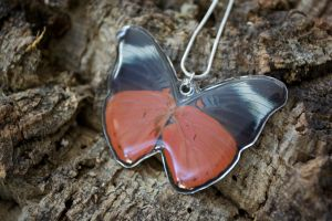 Red Prola Beauty Butterfly by TheButterflyBabe