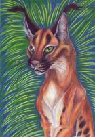 Caracal by Eviecats