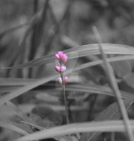 Teeny Flower - Bold by sioranth
