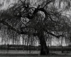 Hanging tree... by wolfcreek50