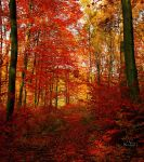 Autumn forest VIII by valiunic