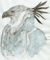 February - Harpy Eagle by xHalloweenx