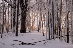 Snowy Wood by dragon-fly-to-me