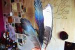 magpie feathers by tea-peace