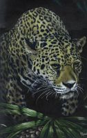 Jaguar by marcgosselin