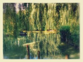 Water Willows by yolellow