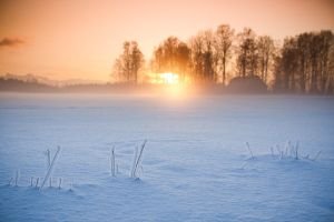 Mist in the winter by X-chromosome