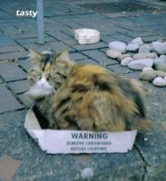 tasty by cat-lovers