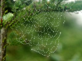 Web by LucieG-Stock