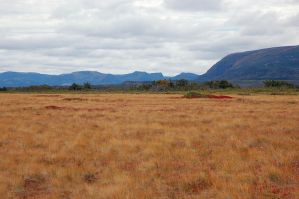 colorful bog by LucieG-Stock