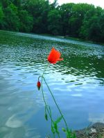 Poppies front of the lake by Ketiszkusz
