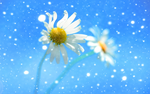 Windows 8 Winter Edition by in-dolly
