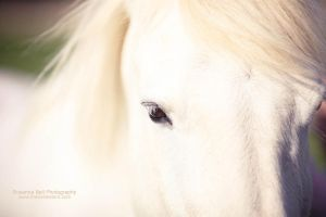 White Beauty - Day 93 by rosannabell