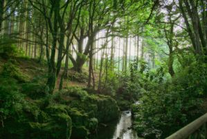 Enchanted Forest by StacreePhotographee