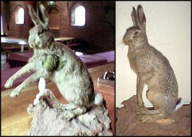 Taxidermy - Hare Restoration by Illahie