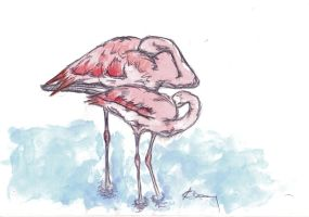 Flamingos in water by kennedyblue