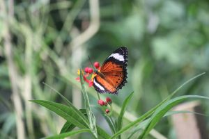 butterflies 2 by Lindy2