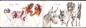 Australian Shepherd . Doberman by firecloud