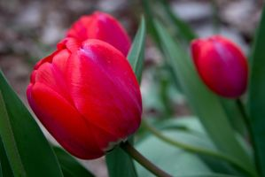 Two Lips Are Blooming by DeTea