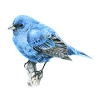 Bird With Colored Pencil by KasaLaurend