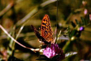 Butterflower by alexmuahaha