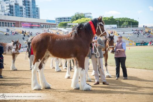 RQS Clydesdale #108 by AmoretteRose