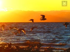 Seagulls Flocking At Sunset by wolfwings1