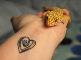 Pretty Leopard Gecko by Murphy1210