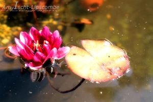 Water Lilly by california-wishing