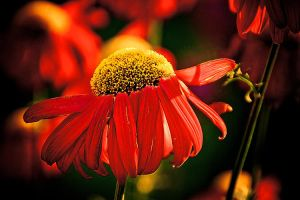 Floral on Fire Macro by Witch-Dr-Tim