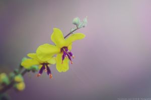 these colors by CliffWFotografie