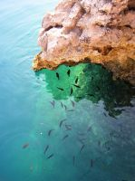 Fishes (2) by ordinarygirl1