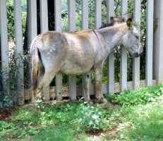 Donkeys are quite at home in the reserve by SiradLah